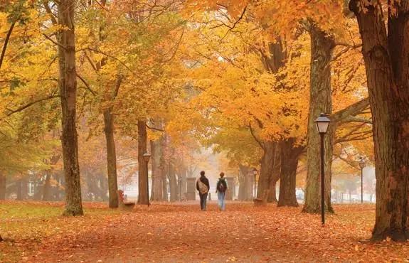 夜晚秋天森林风景分享展示
